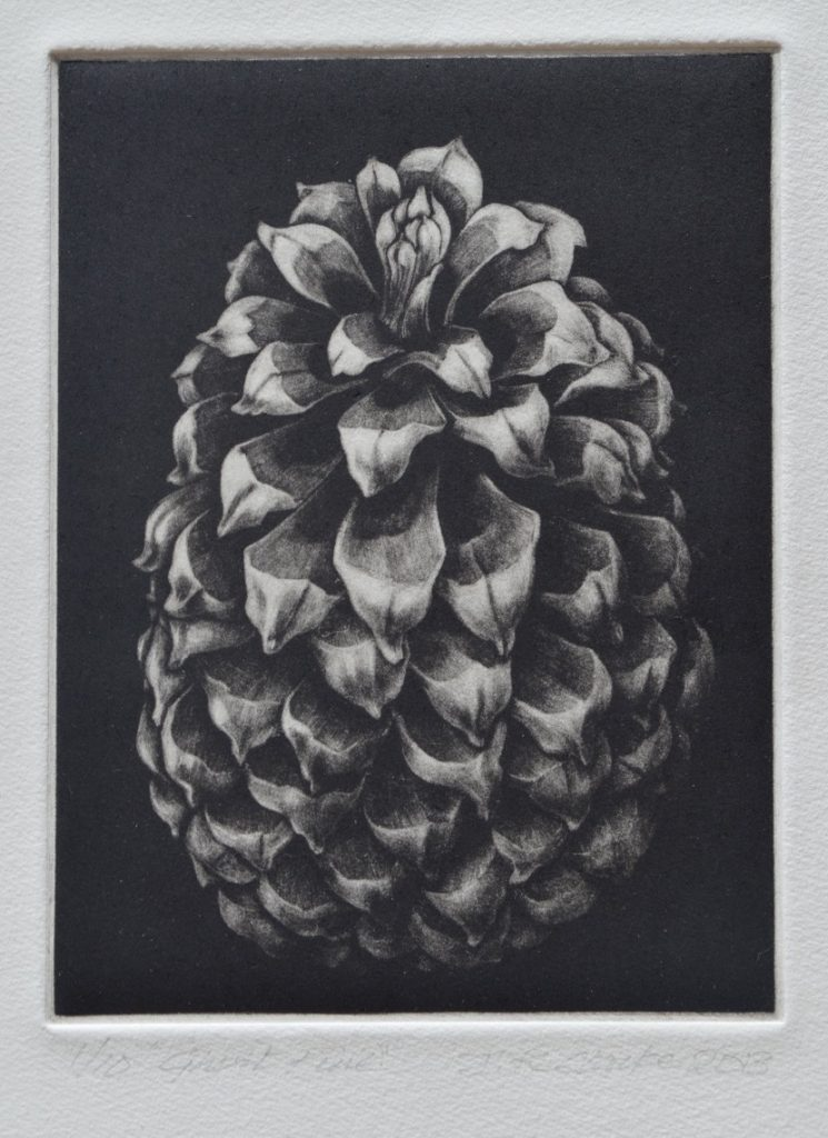 fig-9-pine-cone
